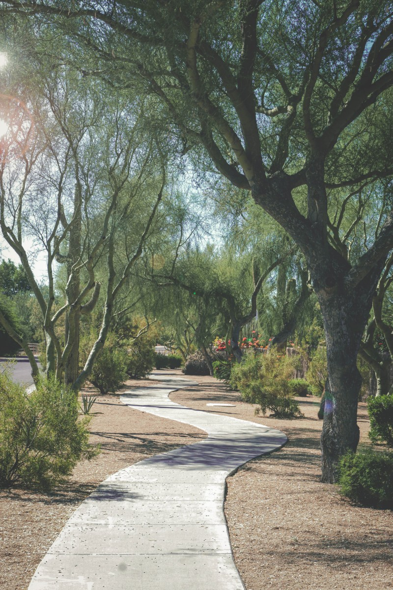 photo of a park in Scottsdale that might be Scottsdale Nature Area, not sure. I didn't have an image of this park so I dug up this photo on Unsplash. As memory serves, this looks similar to Scottsdale Nature Area.