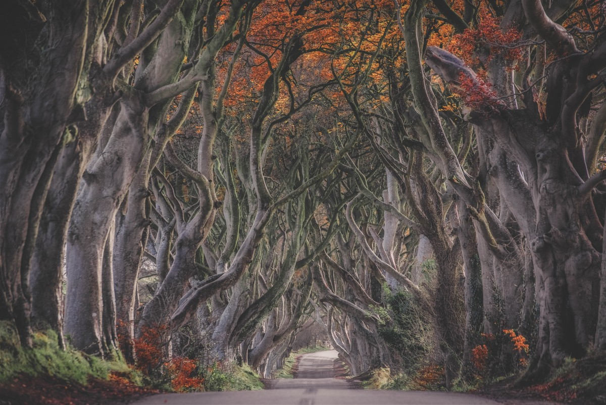 road trip questions for couples - fantasy Game of Thrones scene for a series of fantasizing travel road trip questions for couples