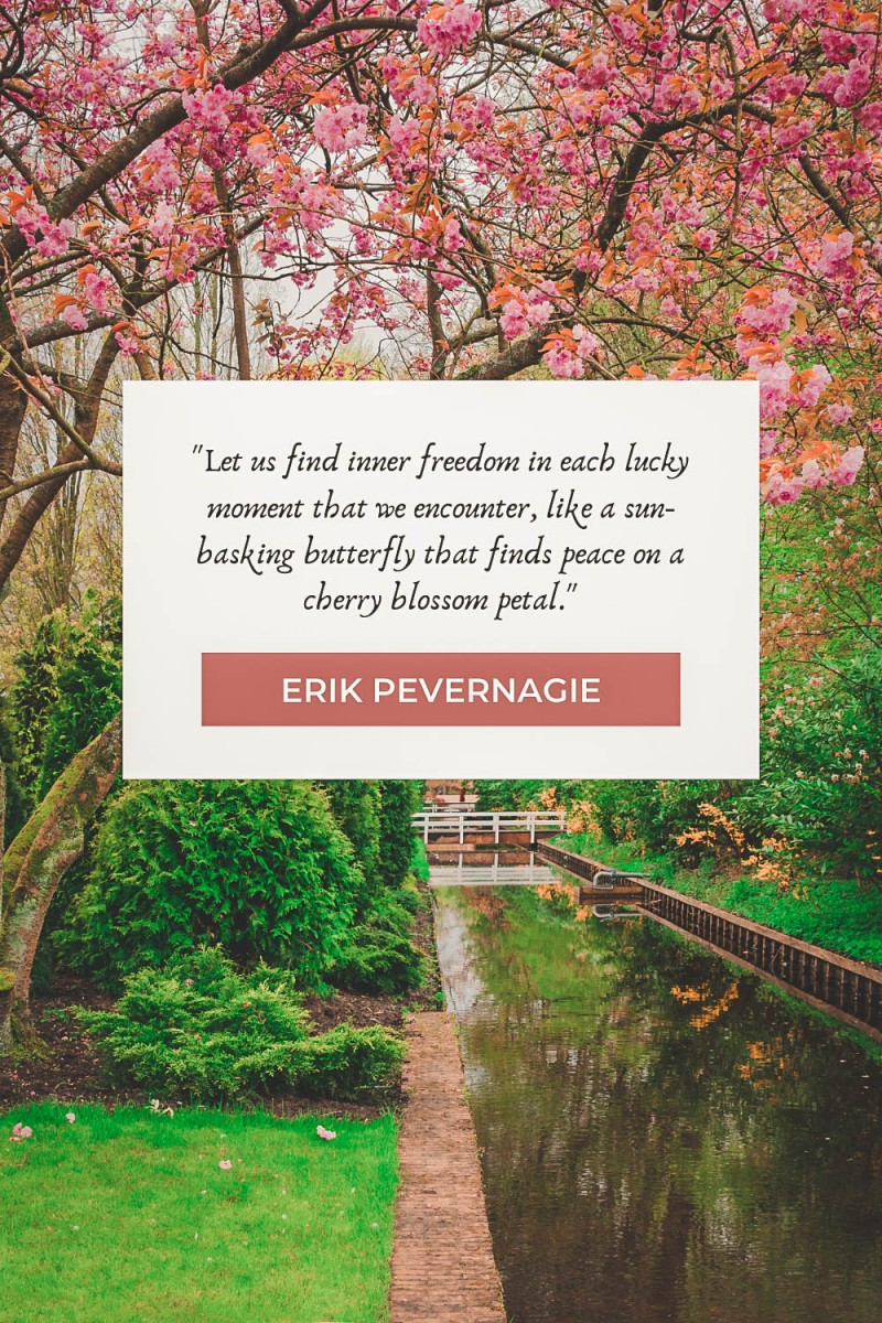 Cherry blossom quotes by Erik Pevernagie