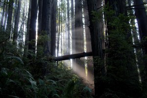 light shines through the forest