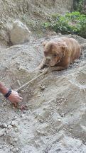 cadela-enterrada-