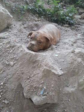 cadela-enterrada-1