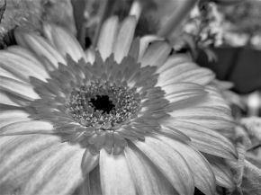 Es gibt Blumen, die beeindrucken acuh ohne Farbe