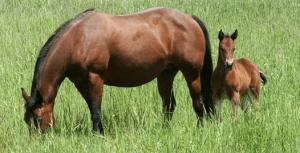 horse Q&A sufficient forage-https://www.pasturaslosalazanestx.com