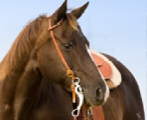 spring horse care tips