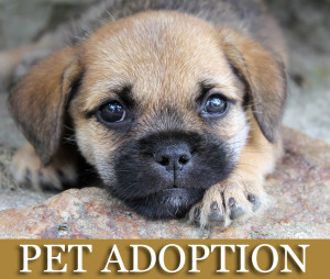 Pet Adoption