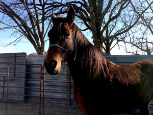 Keeping horses healthy in winter