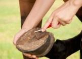 liberty horse shoe nails