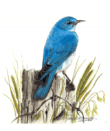 Great Backyard Bird Count 2017
