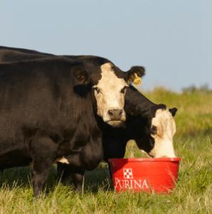 Cattle Minerals