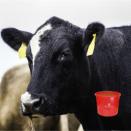 Winter Cattle Supplements