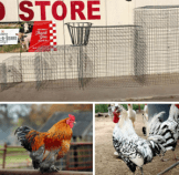 Rooster fly pens