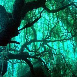 arbol sumergido en el bosque de villa traful