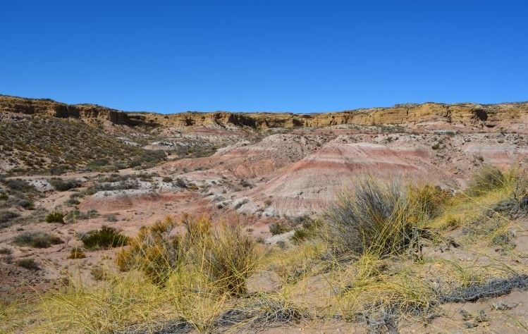 Lugar del descubrimiento del dinosaurio.