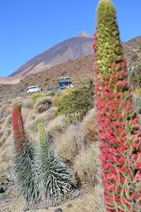 Tajinastes Rojos y el Teide