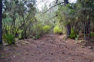 9 Consejos para la practica de senderismo