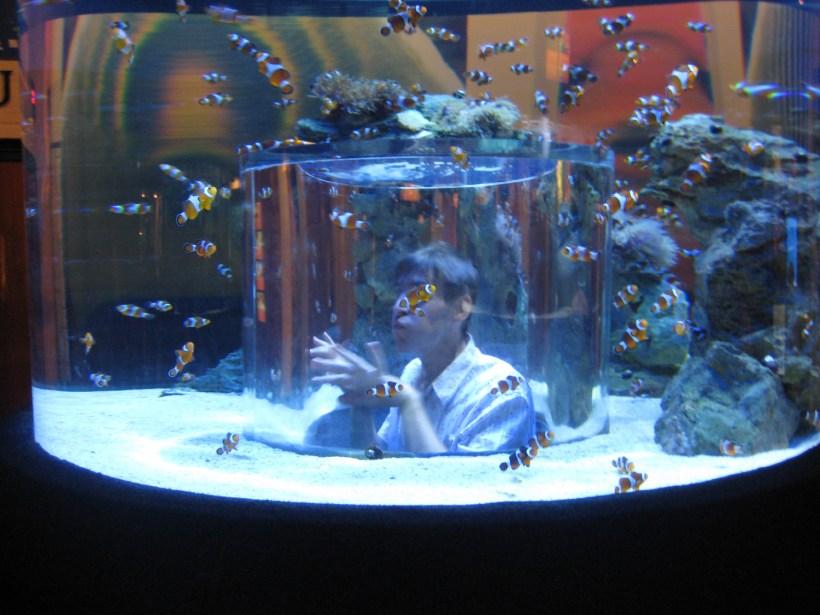Biggest Aquarium Fish Market In Mumbai Allcanwear Org