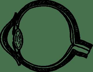 Eye Cross-Section