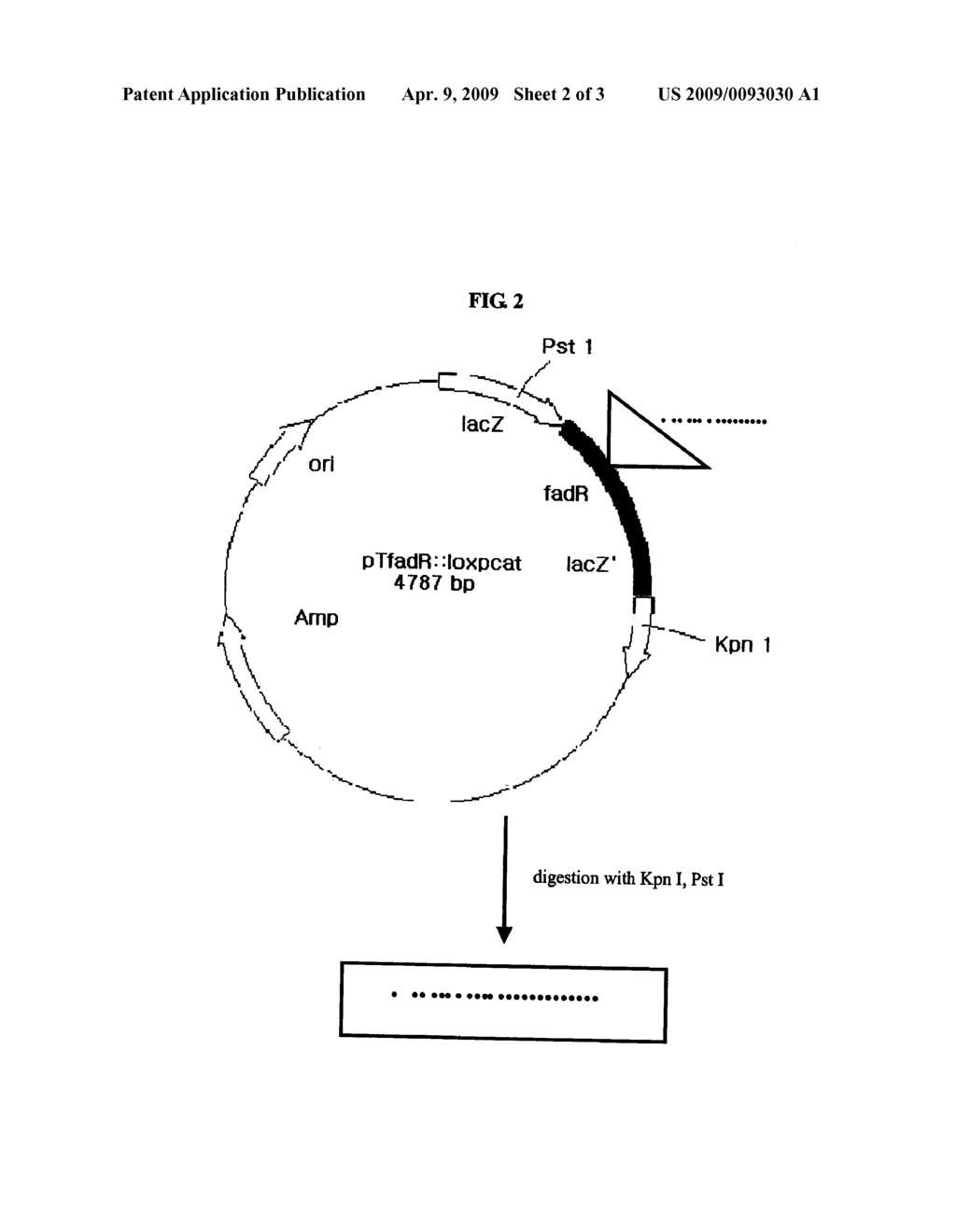 hight resolution of fadr knock out microorganism and methods for producing l threonine diagram schematic and image 03