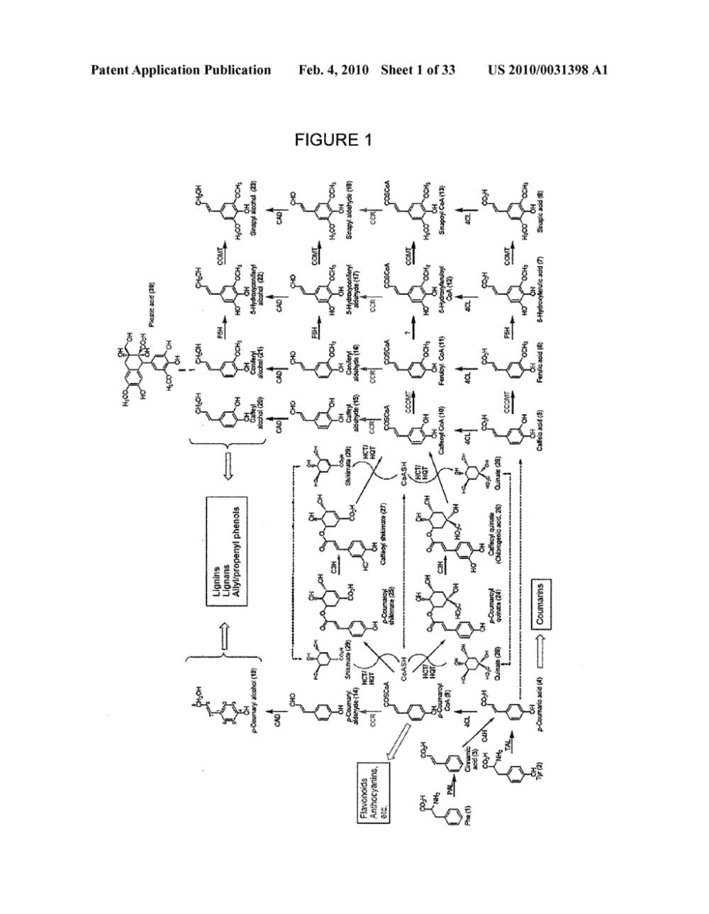 medium resolution of genes encoding chavicol eugenol synthase from the creosote bush larrea tridentata diagram schematic and image 02