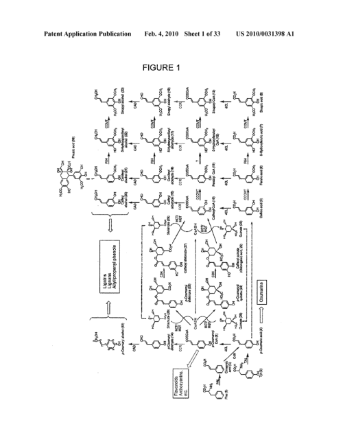 small resolution of genes encoding chavicol eugenol synthase from the creosote bush larrea tridentata diagram schematic and image 02