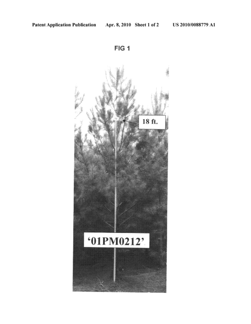 small resolution of pine tree part diagram