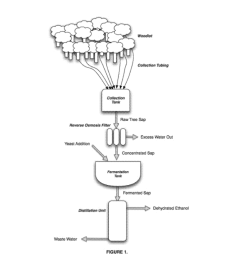 production of ethanol from tree sap diagram schematic and image 02 [ 1024 x 1320 Pixel ]