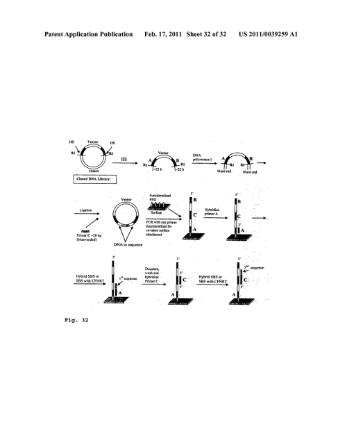 small resolution of dna sequence with non fluorescent nucleotide reversible terminators and cleavable label modified nucleotide terminators diagram schematic and image 33