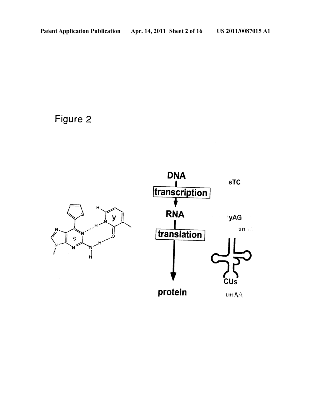 hight resolution of nucleoside and nucleotide having an unnatural base and use thereof diagram schematic and image 03