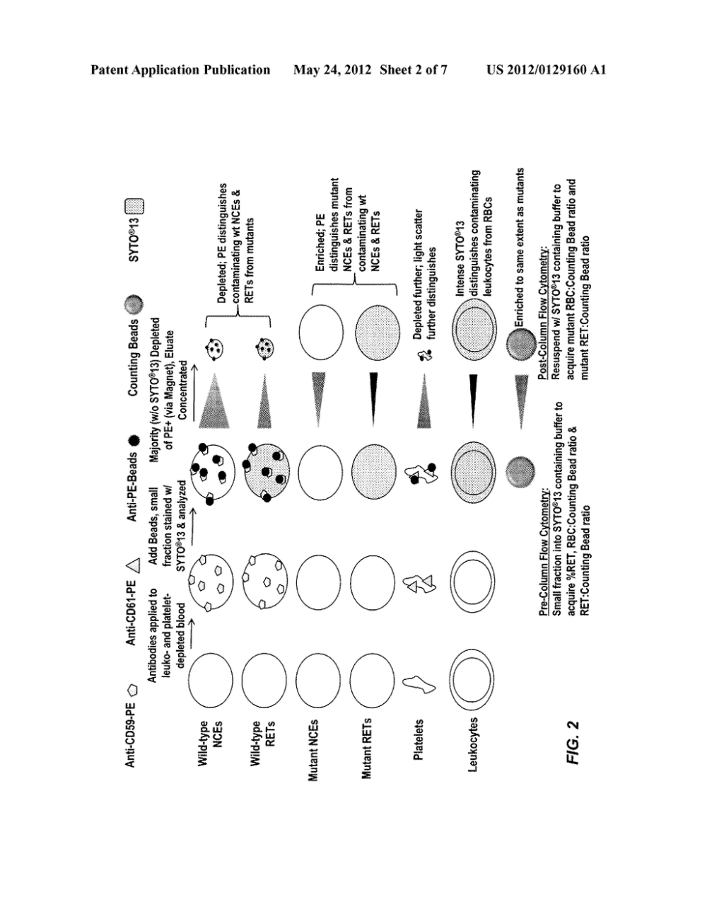 medium resolution of rapid in vivo gene mutation assay based on the pig a gene diagram schematic and image 03