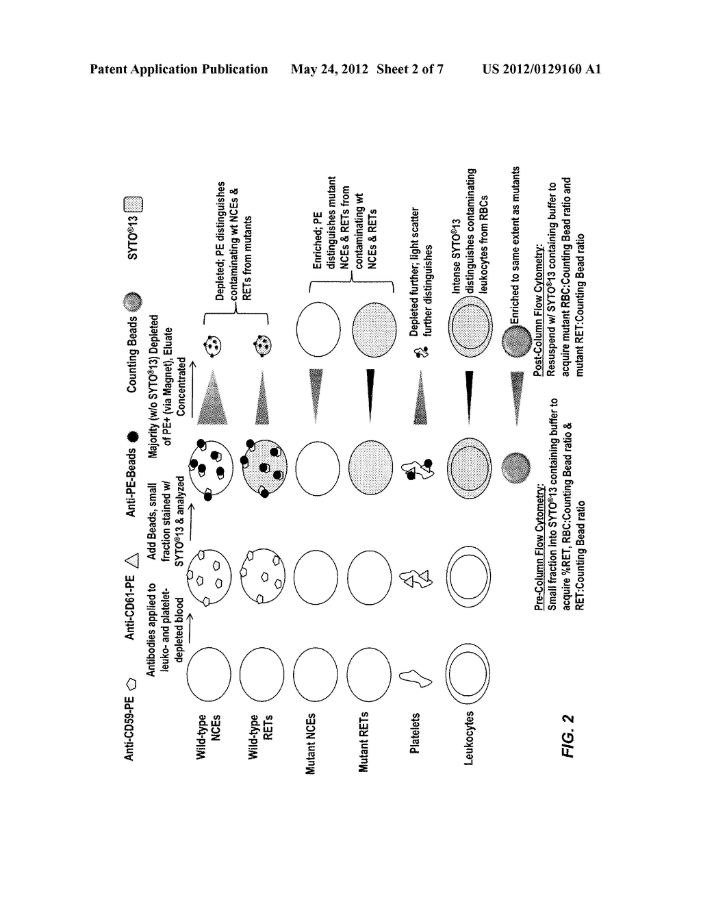 hight resolution of rapid in vivo gene mutation assay based on the pig a gene diagram schematic and image 03
