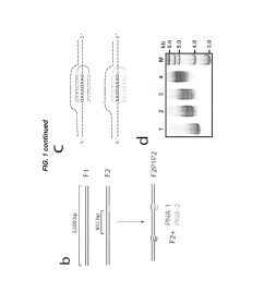 label free sensing of pna dna complexes using nanopores diagram schematic and image 03 [ 1024 x 1320 Pixel ]