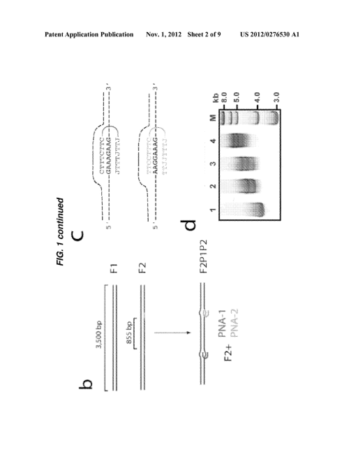 small resolution of label free sensing of pna dna complexes using nanopores diagram schematic and image 03