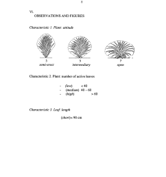 rose leaf diagram [ 1024 x 1320 Pixel ]