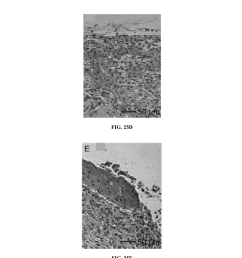 nanofiber scaffolds and methods for repairing skin damage diagram schematic and image 41 [ 1024 x 1320 Pixel ]