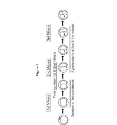 in vitro embryo blastocyst prediction methods diagram schematic and image 02 [ 1024 x 1320 Pixel ]