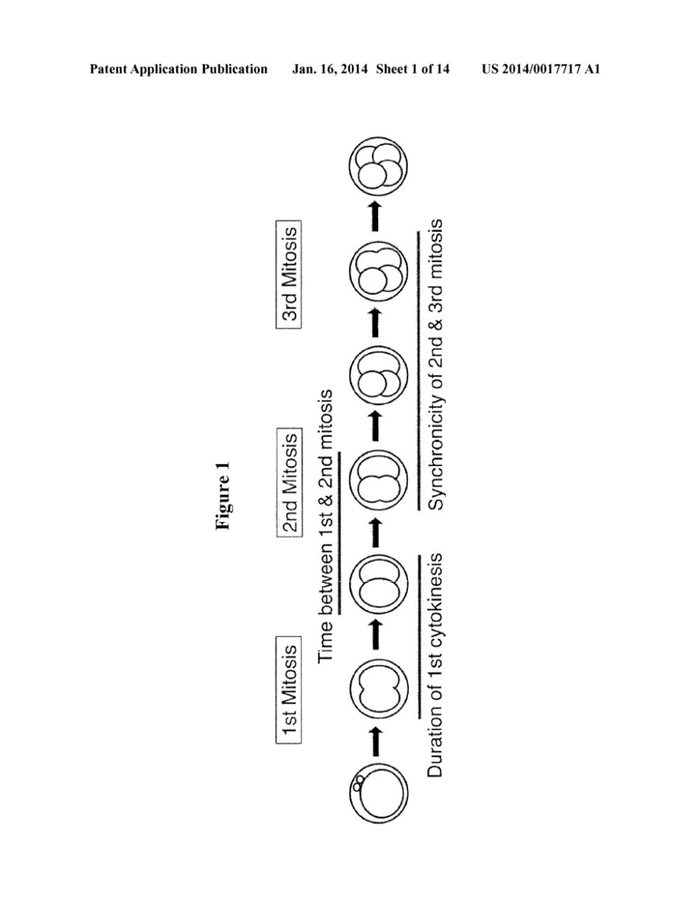 medium resolution of in vitro embryo blastocyst prediction methods diagram schematic and image 02