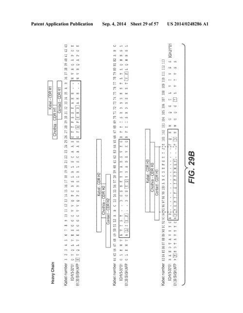small resolution of anti hemagglutinin antibodies and methods of use diagram