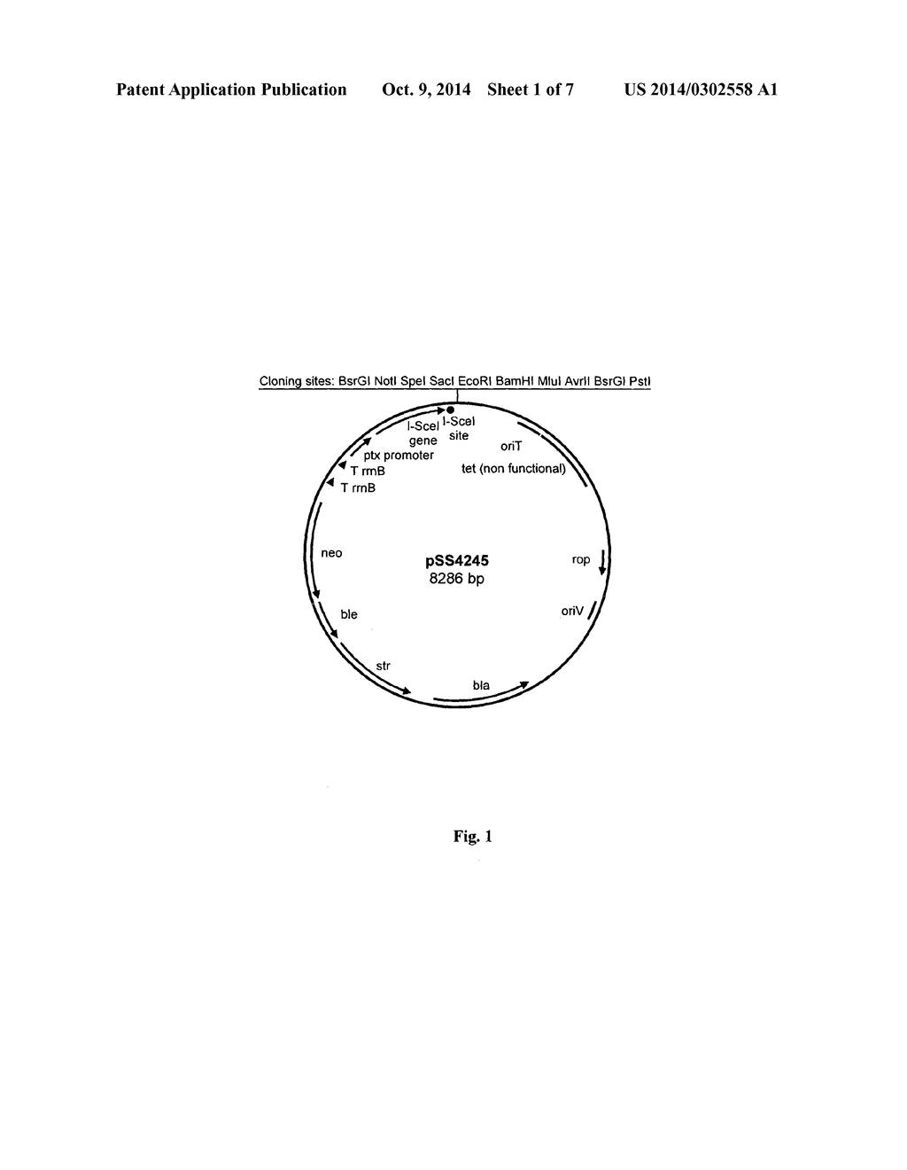 hight resolution of pertussi diagram