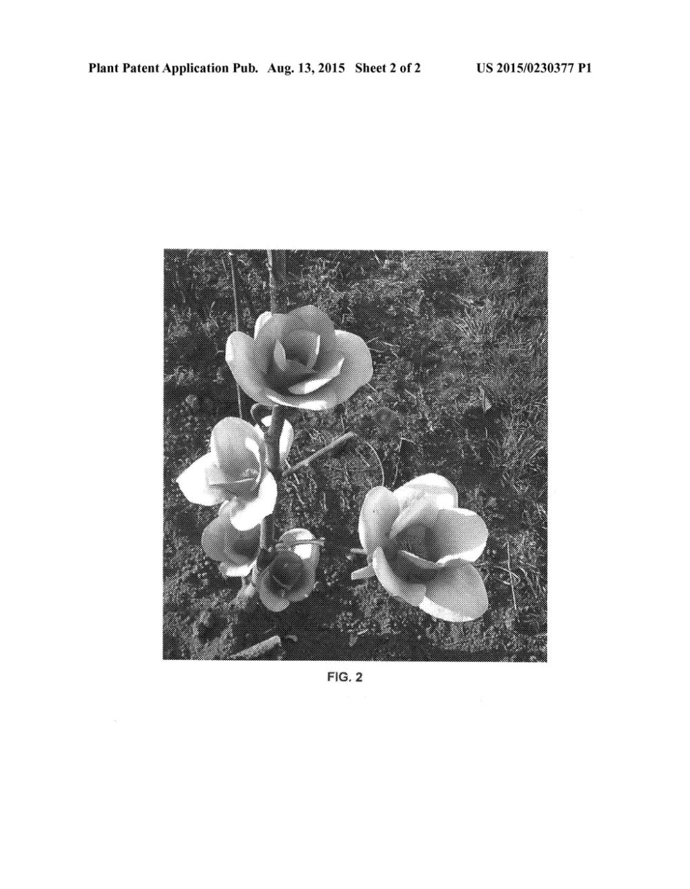 medium resolution of magnolium tree diagram