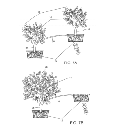plant with differential altitude and distributed root system elevating facade including a plant with distributed root system and methods of producing the  [ 1024 x 1320 Pixel ]