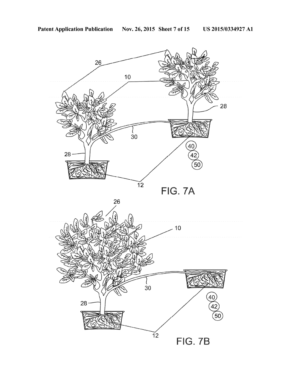 hight resolution of plant with differential altitude and distributed root system elevating facade including a plant with distributed root system and methods of producing the