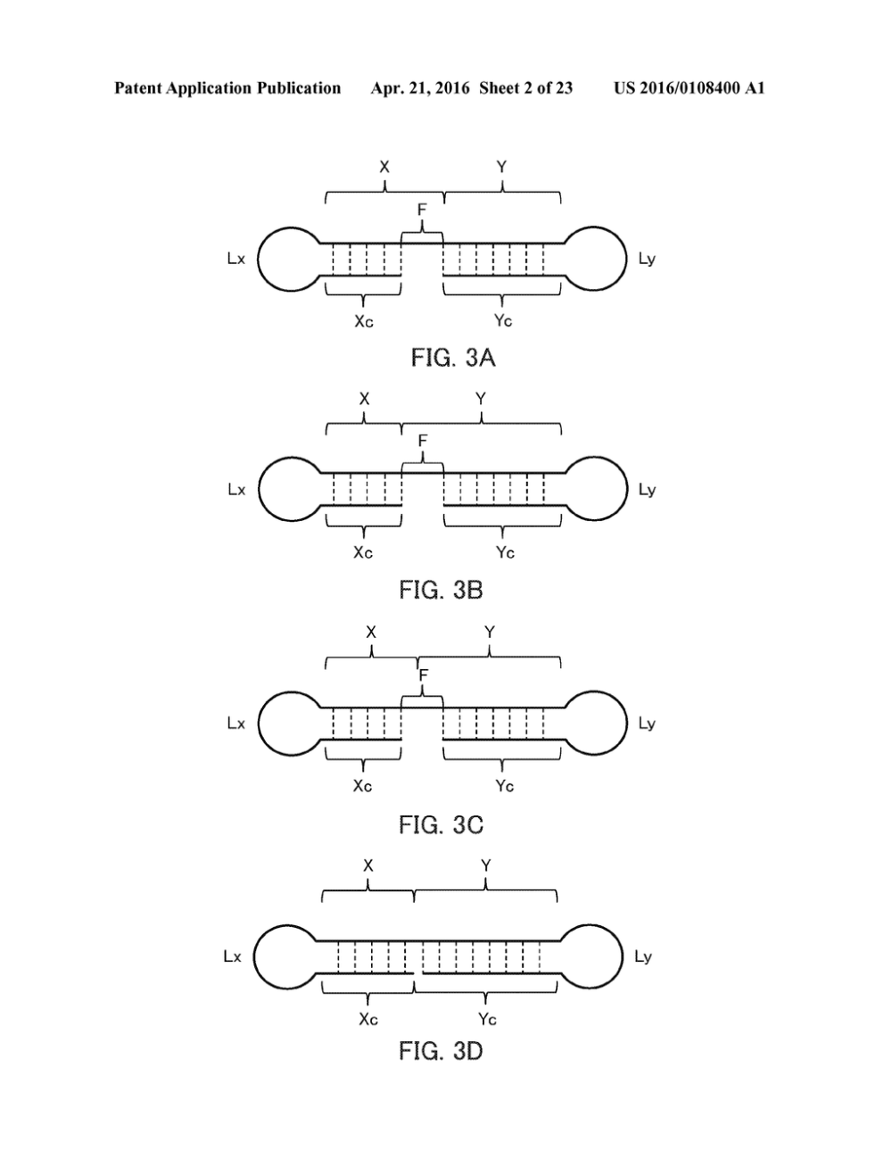 medium resolution of single stranded nucleic acid molecule for controlling gene expression diagram schematic and image 03