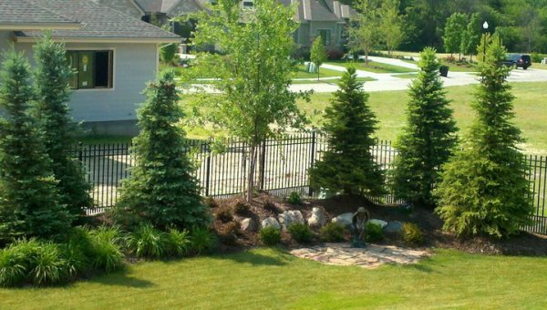 trees & landscaping - patera