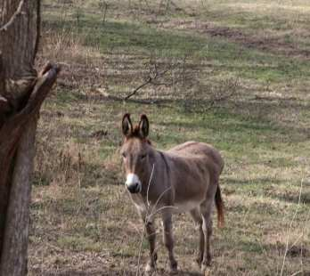 A brown donkey in a field