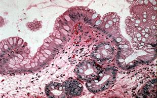 Department of Pathology  Clinical Pathology