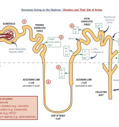 the nephron showing reabsorption hormone action and diuretic action  [ 1733 x 1358 Pixel ]