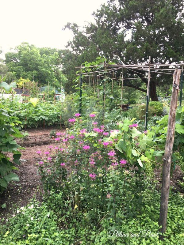 the natural gardener 16