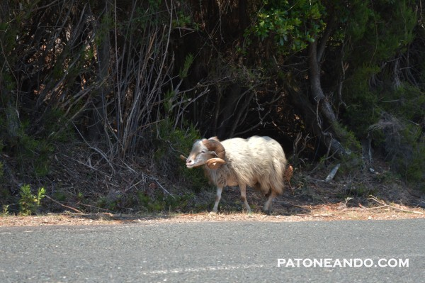 isla sublime corcega-patoneando (5)