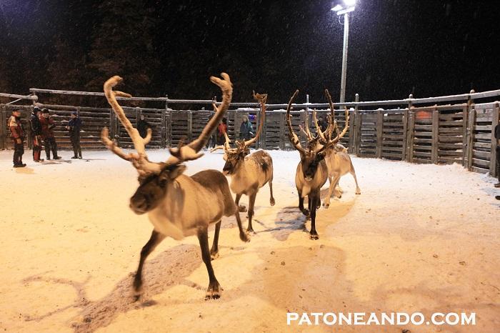 pueblo encantado en Laponia-Patoneando (29)